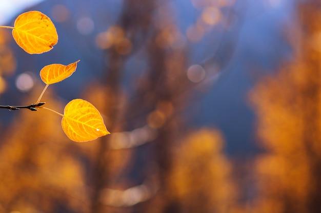 Gelbe blätter im herbst. es kann für den hintergrund verwendet werden.
