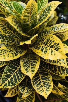 Gelbe blätter im tropischen wald