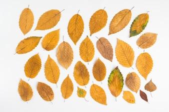 Gelbe Blätter auf weiß