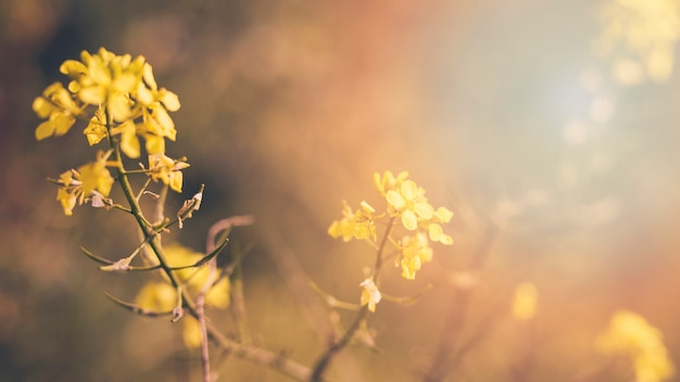 Gelbe blühende blühende pflanze