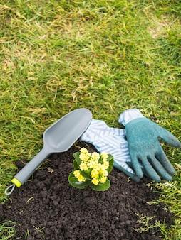 Gelbe blühende pflanze, die heraus vom boden wächst