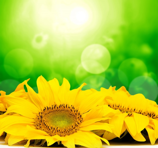 Gelbe blüten mit bokeh-effekt