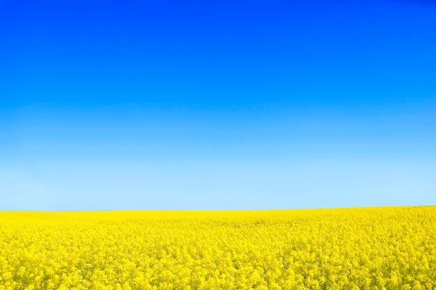 Gelbe blüten mit einem blauen himmel