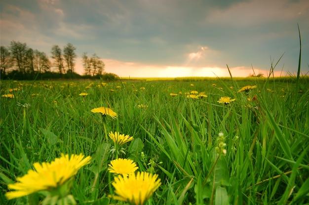 Gelbe blüten zwischen gras