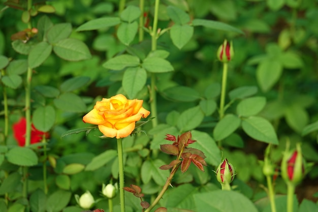 Gelbe blume auf einem unscharfen hintergrund