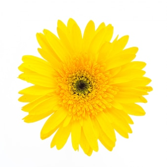 Gelbe blume auf einem weißen hintergrund