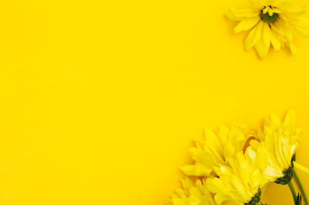 Gelbe blume der draufsicht mit copyspace