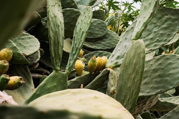 Gelbe blume des kaktushintergrundes
