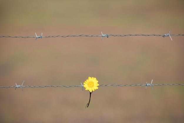 Gelbe blume, die an einen drahtzaun hält
