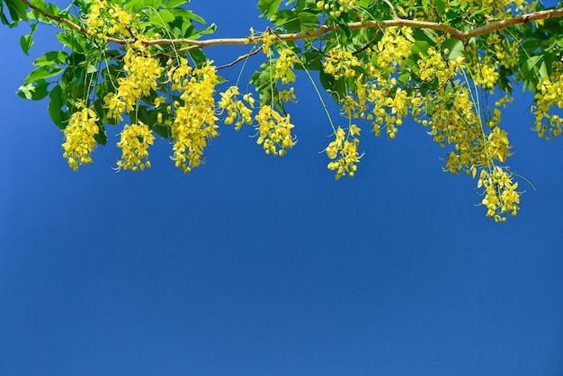 Gelbe blume, die auf baumast blüht und hängt