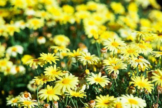 Gelbe blume in den gartendetails