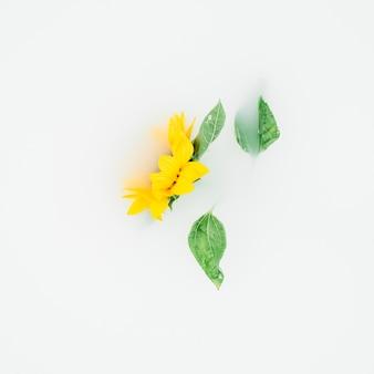 Gelbe blume mit blättern auf weißem hintergrund