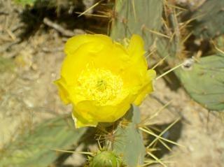 Gelbe blume, pflanze
