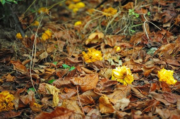 Gelbe blume trocken, fällt auf den boden die blüten blühen in der herbstsaison.