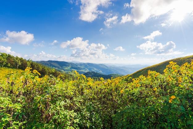 Gelbe blumen am berg