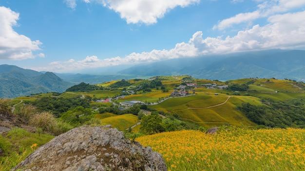 Gelbe blumen auf der bergstadt von taitung, taiwan.