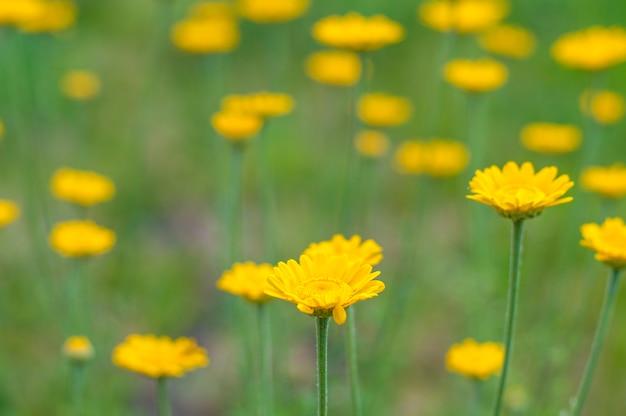 Gelbe blumen auf einem grünen hintergrund