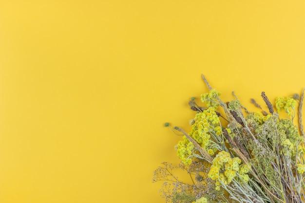 Gelbe blumen auf gelbem grund. minimalismus. flach liegen.