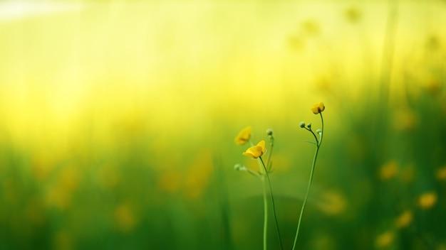Gelbe blumen auf makroaufnahme