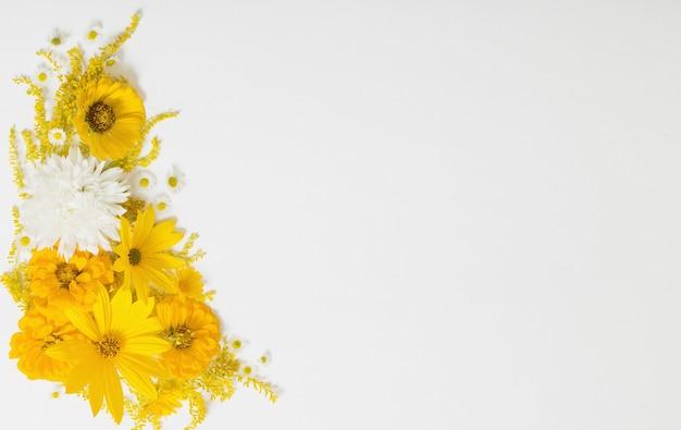 Gelbe blumen auf weißem hintergrund