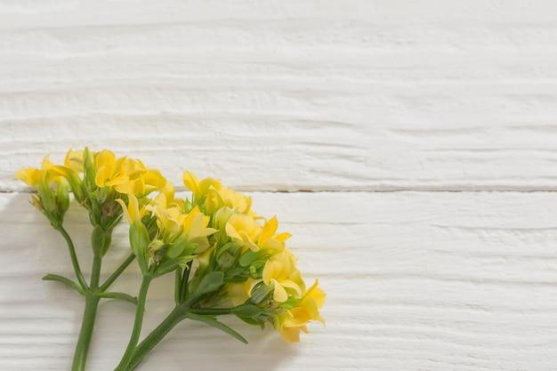 Gelbe blumen auf weißer holzoberfläche