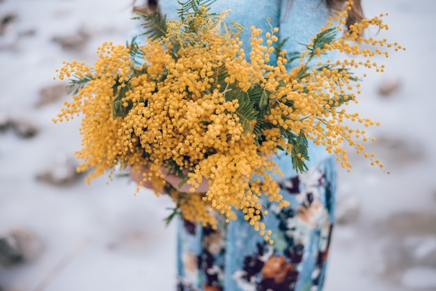 Gelbe blumen der mimose in den händen der frau, geerntet.