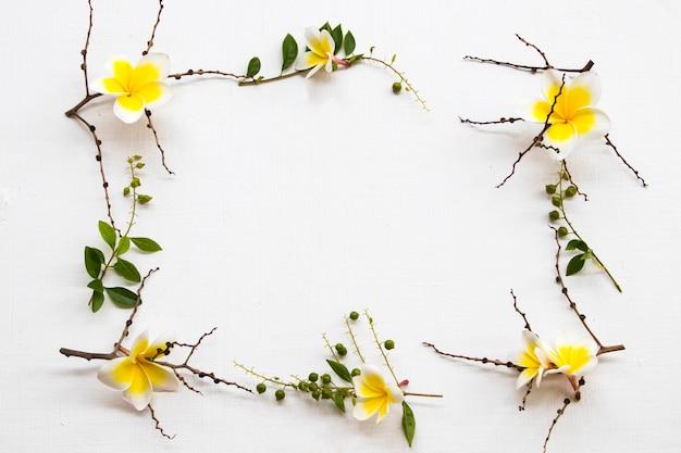 Gelbe blumen frangipani lokale flora von asien