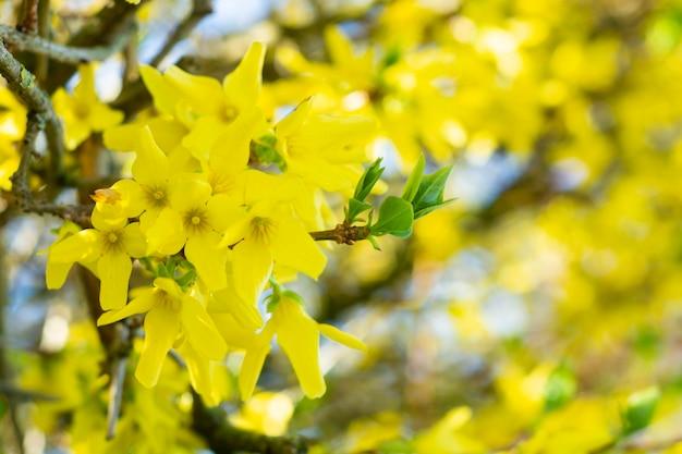 Gelbe blumen gegen blauen blured himmelhintergrund