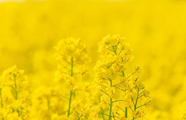 Gelbe blumen im garten und im gelben abstrakten hintergrund