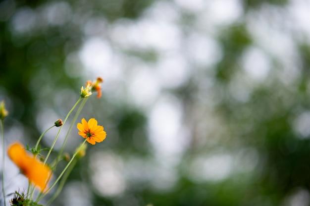 Gelbe blumen in einem schönen blumengarten