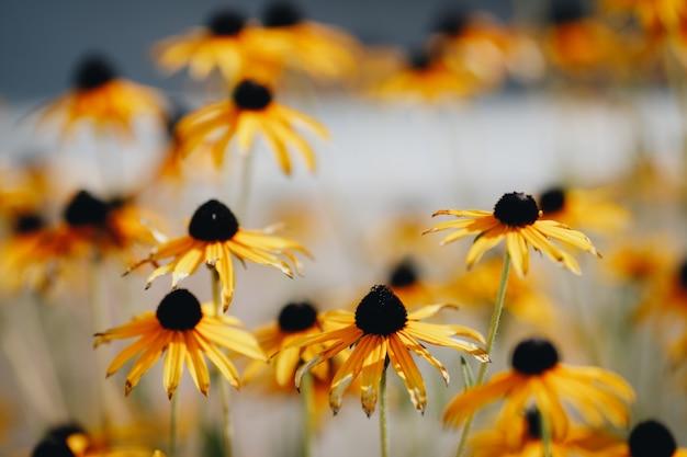 Gelbe blumen in einer blumenbeet-nahaufnahme. hochwertiges foto