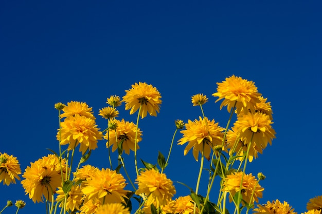 Gelbe blumen mit blauem himmel