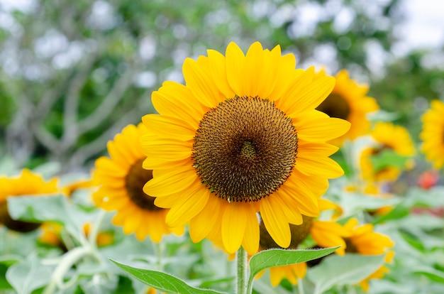 Gelbe blumenblumenblätter mit einem unscharfen hintergrundmuster.