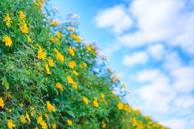 Gelbe blumenfelder auf grünem hügel im blauen himmel