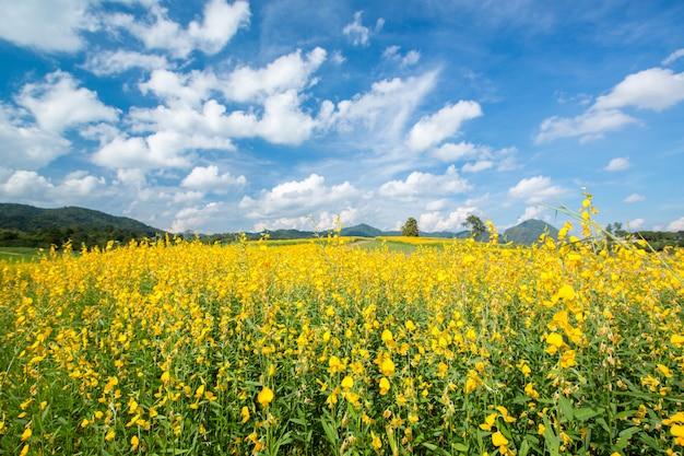Gelbe blumenfelder gegen blauen himmel