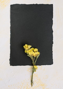 Gelbe blumenniederlassung mit schwarzem papier auf tabelle