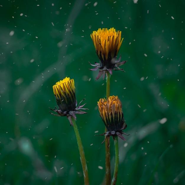 Gelbe blumenpflanze