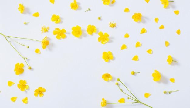 Gelbe butterblumen auf weißem hintergrund