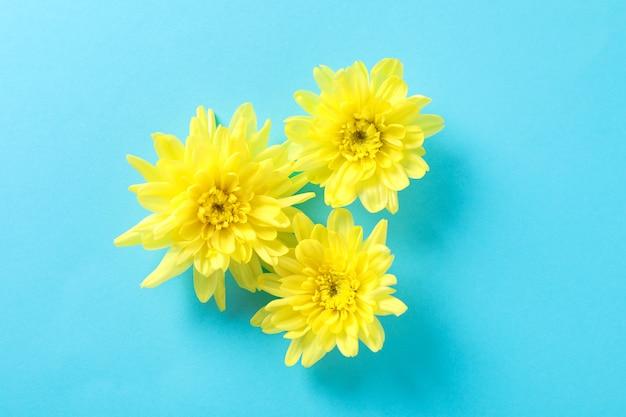 Gelbe chrysanthemen auf blauem tisch