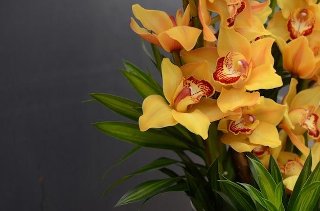 Gelbe cymbidiumblume auf schwarzem hintergrund