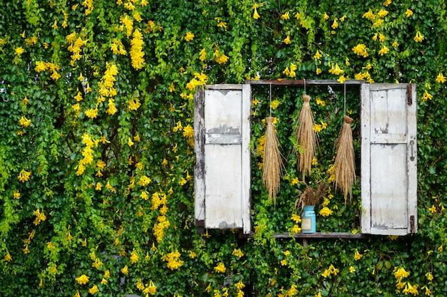 Gelbe efeublume und grüne blattrebekletterpflanzenwand strukturiert