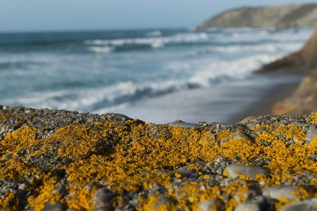 Gelbe flechte auf dem stein nahe dem meer. atlantikküste.