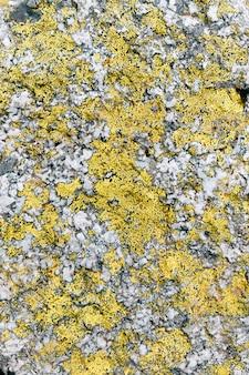 Gelbe flechten textrure auf grauem stein