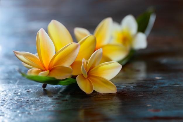 Gelbe frangipani-plumeria-blume auf dunklem tisch