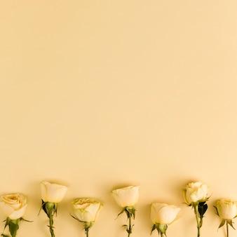 Gelbe frische rosen mit kopienraum