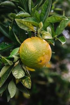 Gelbe frucht auf grünen blättern