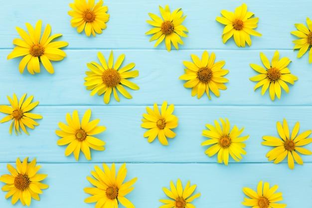 Gelbe gänseblümchen von oben