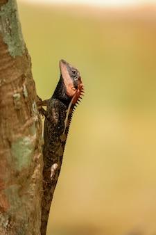 Gelbe garteneidechse ist reptilien tier nah in der wildnis
