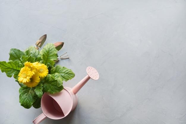 Gelbe gerbera-, maut- und gartenblumenanlage auf grau.