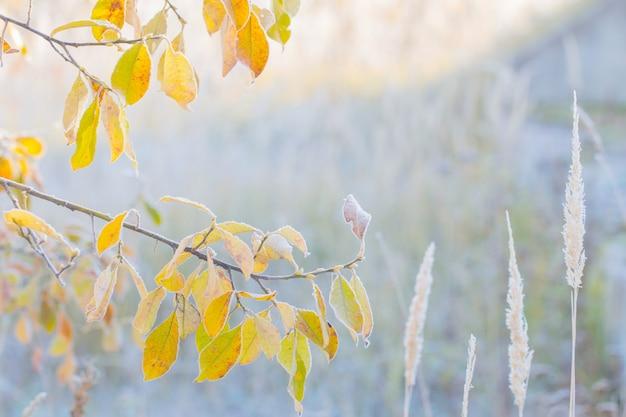 Gelbe herbstblätter im frost
